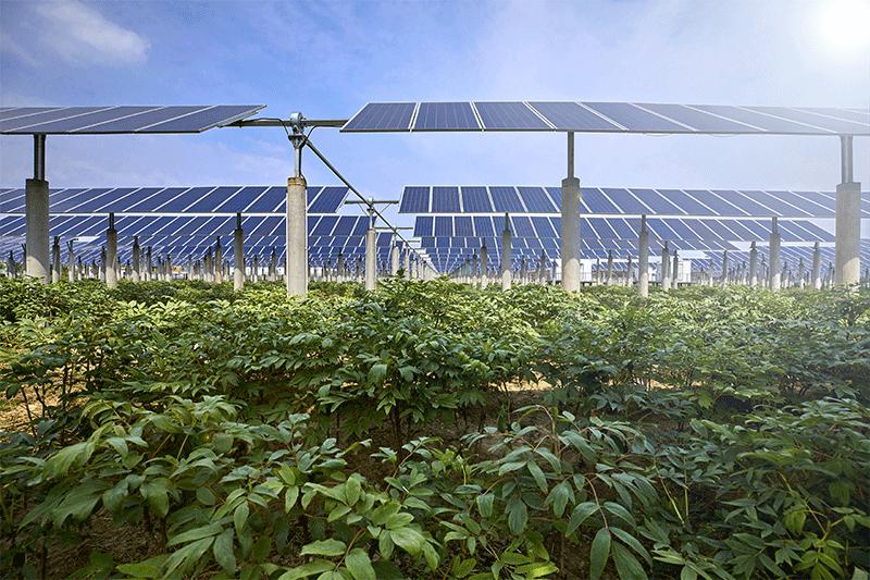 Agri-photovoltaic